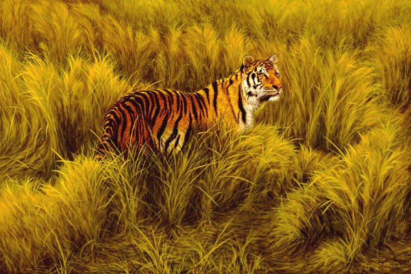 Study of Tiger in Long Grass